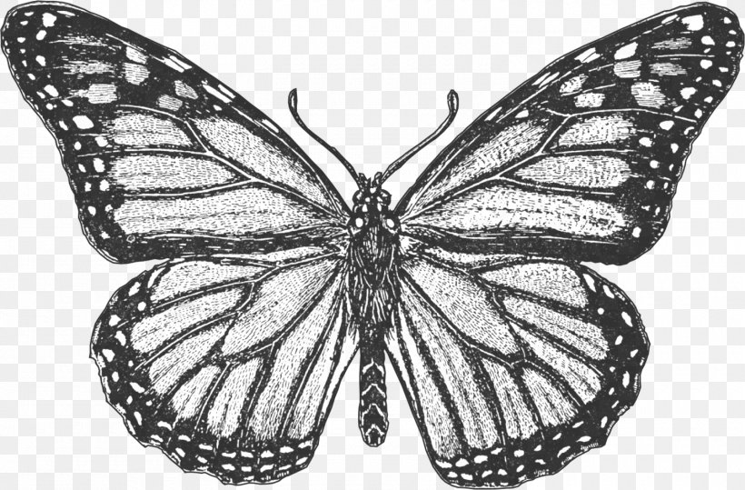 Monarch Butterfly Coloring Book Colouring Pages Insect ...