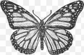 Butterfly - Monarch Butterfly Coloring Book Colouring Pages Insect PNG