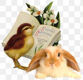 Easter - Domestic Rabbit Easter Bunny Easter Postcard Clip Art PNG