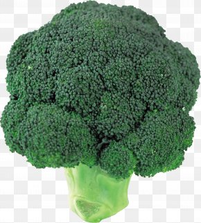 Broccoli Image - Broccoli Slaw Vegetable PNG