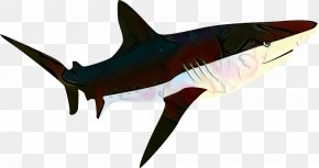Animal Figure Carcharhiniformes - Great White Shark Background PNG