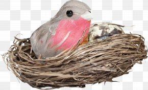 Birds Nest - Edible Birds Nest Bird Nest PNG