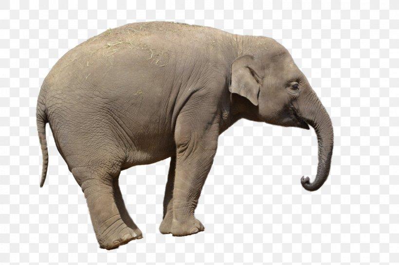 African Bush Elephant Asian Elephant Clip Art, PNG, 1200x798px, African Bush Elephant, African Elephant, African Forest Elephant, Asian Elephant, Elephant Download Free