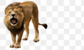 Roar, Angry Lion - Lion Roar Clip Art PNG