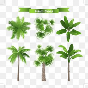 And Palm Leaves - Arecaceae Tree Stock Illustration Leaf PNG