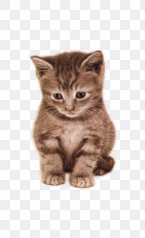 Beautiful Cute Cat In A Daze - Remorse Person .net Love .mobi PNG