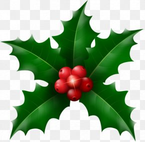 Mistletoe - Desktop Wallpaper Christmas Drawing Clip Art PNG