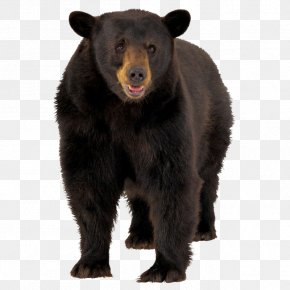 Black Bear Hair - American Black Bear Brown Bear Polar Bear PNG