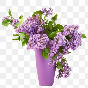 Lilac - Common Lilac Summer Lilac Flower Shrub PNG