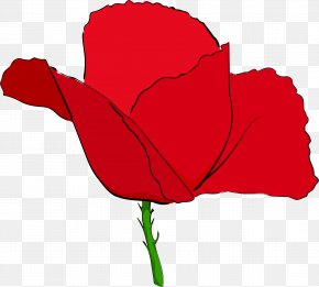 Poppy - Remembrance Poppy Common Poppy Clip Art PNG