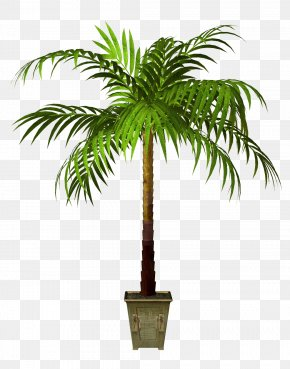 Plants - Flowerpot Asian Palmyra Palm Houseplant PNG