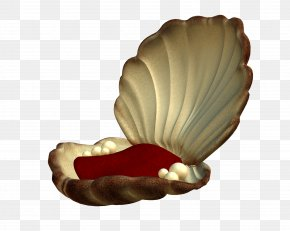 Maritime - Seashell Pearl Mollusc Shell Clip Art PNG