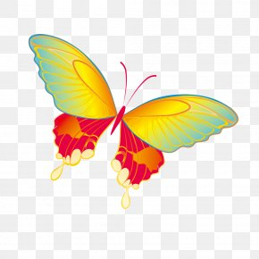 Butterfly - Butterfly Download Clip Art PNG