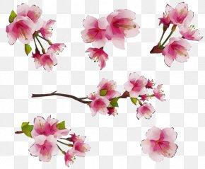 Prunus Twig - Watercolor Pink Flowers PNG