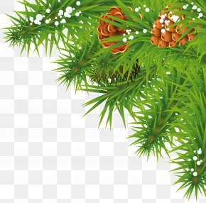 Fir-Tree Branch Image - Image Resolution Clip Art PNG