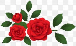 Red Roses Decoration Clip Art - Garden Roses Clip Art PNG