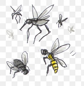 Bee - Honey Bee Clip Art Insect Bites And Stings PNG