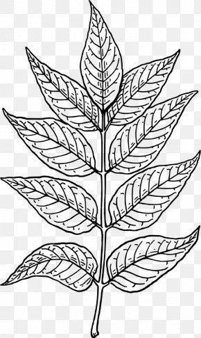 Leaf Line Art - Leaf Line Art Clip Art PNG