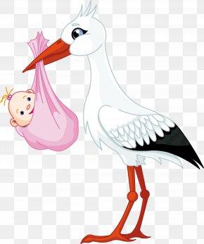 Cute Stork - White Stork Infant Child Clip Art PNG