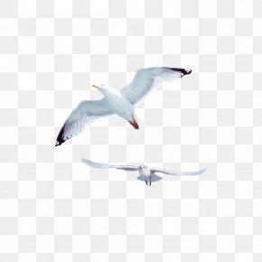 Creative Flying Seagull - Gulls Bird Common Gull PNG