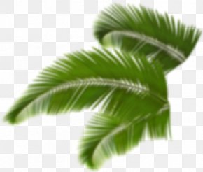 Leaf - Trees And Leaves Arecaceae Palm Branch Clip Art PNG