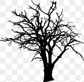 Tree Silhouette - Tree Branch Clip Art PNG