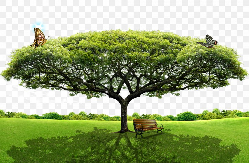 Tree Layers, PNG, 2000x1314px, Tree, Grass, Image File Formats, Landscape, Lawn Download Free