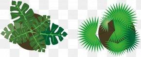 Vector Plants - Plant Euclidean Vector Vecteur Green PNG