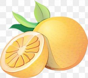 Tangerine Yellow - Orange PNG