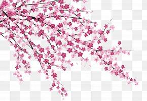 Cherry Blossoms - Cherry Blossom Sakura No Hanabiratachi Wall Painting PNG