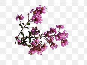 Pink Flowers Perfume - DeviantArt Pink Flowers Digital Art PNG