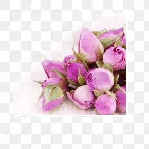 Rose Tea - Flowering Tea Garden Roses Beach Rose Rosa Chinensis PNG