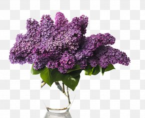 Vase Of Wisteria - Lilac Flower Bouquet Stock Photography Vase PNG