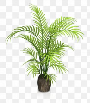 Indoor Potted Plants - Houseplant Flowerpot PNG