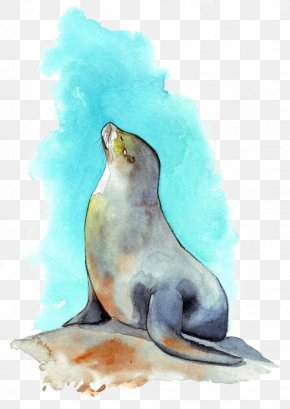 Seal - Sea Lion Watercolor Painting PNG