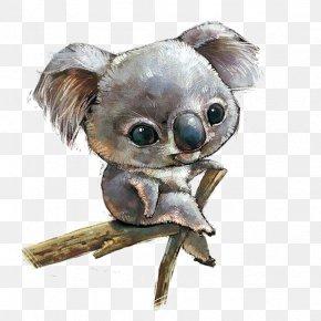 Hand-painted Koala - Koala Illustration PNG