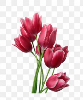 Red Tulips - Tulip Flower Stock Photography Clip Art PNG