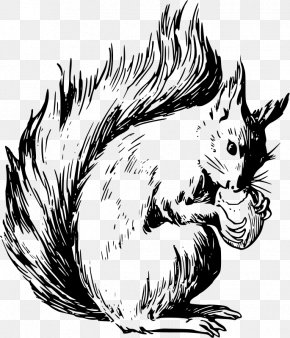 Sky Squirrel - Eastern Gray Squirrel Tree Squirrel American Red Squirrel Rodent PNG