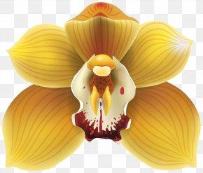 Orchid Transparent Clip Art - Orchids Yellow Clip Art PNG