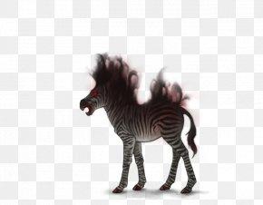 Zebra Foal - Quagga Lion Wildebeest Mane Zebra PNG