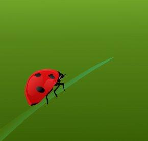 Bug - Beetle Close-up Pest Desktop Wallpaper Invertebrate PNG