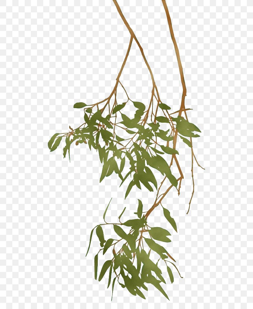 Plant Flower Leaf Tree Branch, PNG, 560x1000px, Watercolor, Branch, Flower, Flowering Plant, Houseplant Download Free