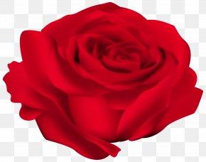 Red Rose Flower Image - Rose Flower Red Clip Art PNG