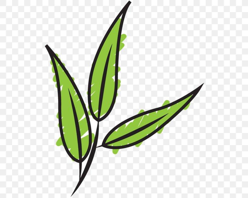 Clip Art Leaf Plant Stem Line Grasses, PNG, 542x655px, Leaf, Botany, Flower, Flowering Plant, Grass Download Free