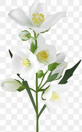 White Flower Clip Art Image - Flower White Clip Art PNG