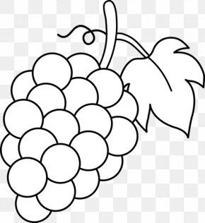 Grapes Drawing - Common Grape Vine Wine Juice Clip Art PNG