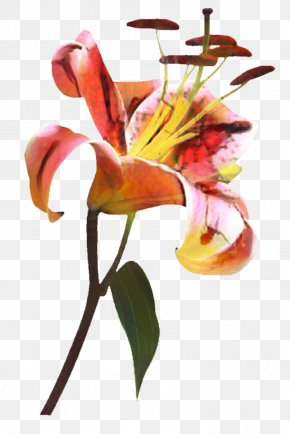 Lily Family Nepenthes - Lily Flower Cartoon PNG