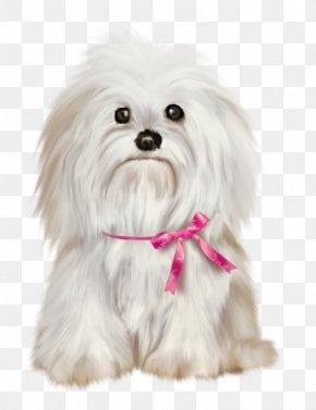 Puppy - Maltese Dog Shih Tzu Pekingese Yorkshire Terrier Havanese Dog PNG