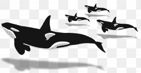 Whale Watching - Dolphin Killer Whale Whale Watching Cetaceans Blue Whale PNG