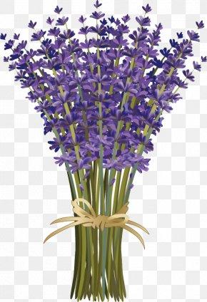 Cartoon Bouquet Of Lavender Bouquet Creative - Lavandula Dentata French Lavender Flower Bouquet Floral Design PNG